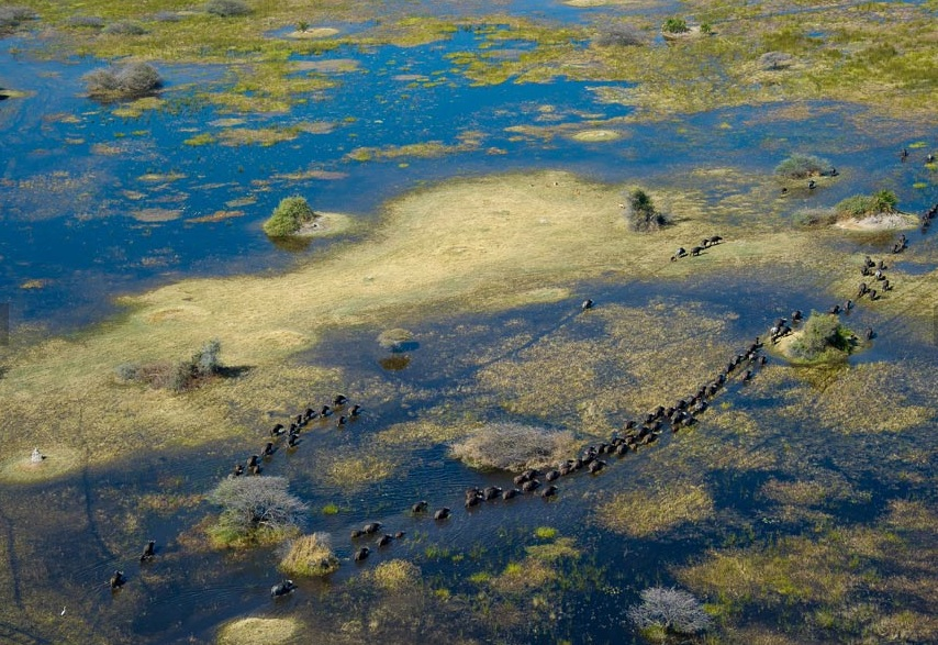 Elephants in the Okavango Delta (credit Wilderness Safaris)