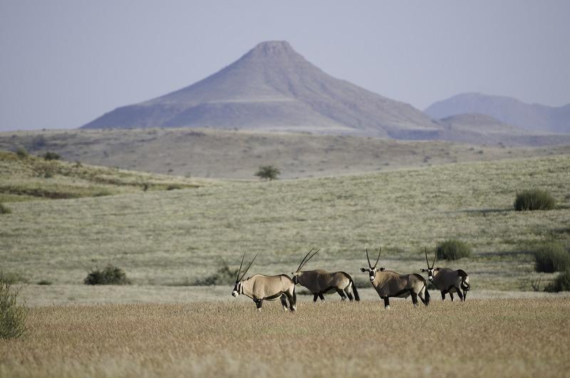 Oryx at Palmwag's Desert Rhino Camp (credit: Wilderness Safaris)