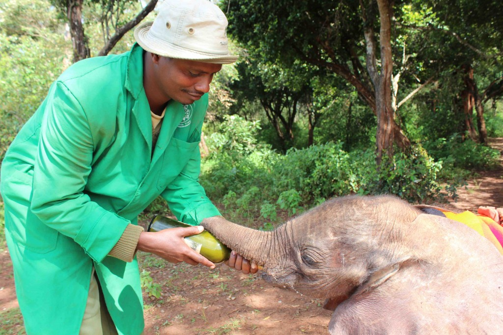 David Sheldrick Wildlife Trust - it's a very special experience to visit this place