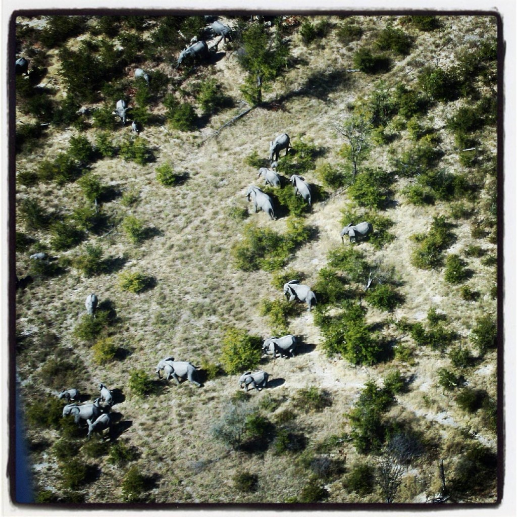 elephants from air lowres