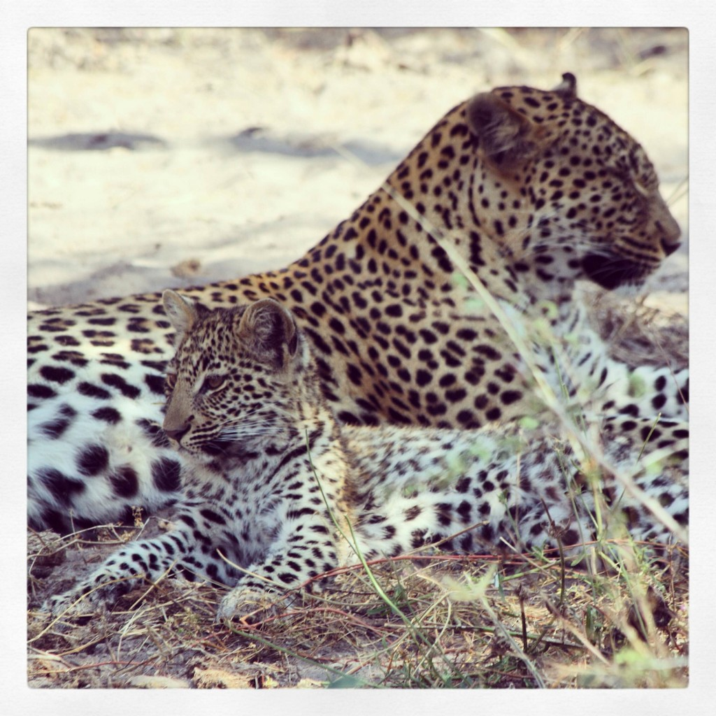 leopard and baby lowres