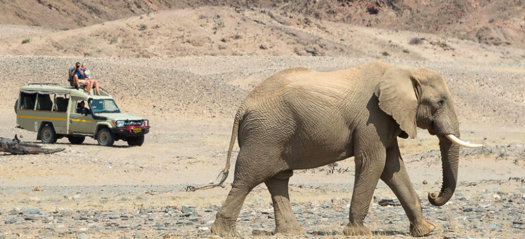 Desert elephants at Hoanib Skeleton Coast Camp, Namibia