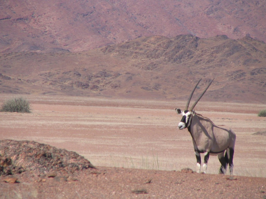 Oryx at the Skeleton Coast, which I'll be visiting with a group in May 2016