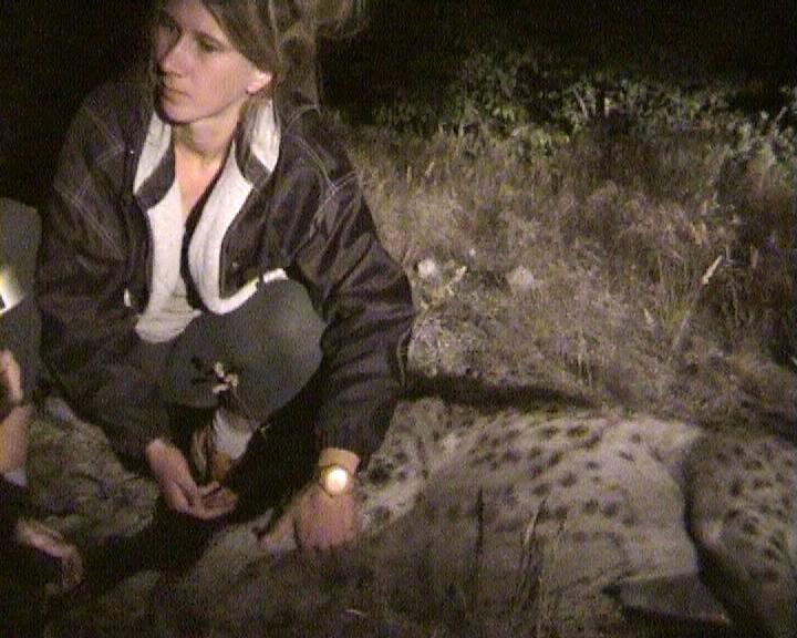 Martina Trinkel removing a radio collar from a spotted hyeana (credit: Martina Trinkel)