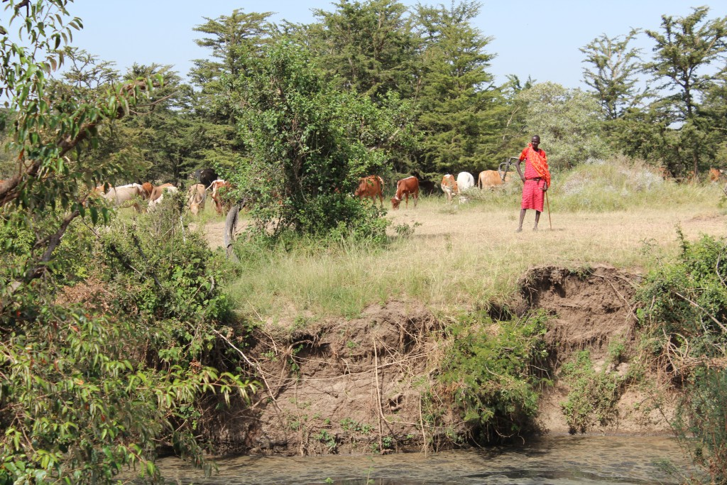 Local Maasai farmers in the Naibosho Conservancy