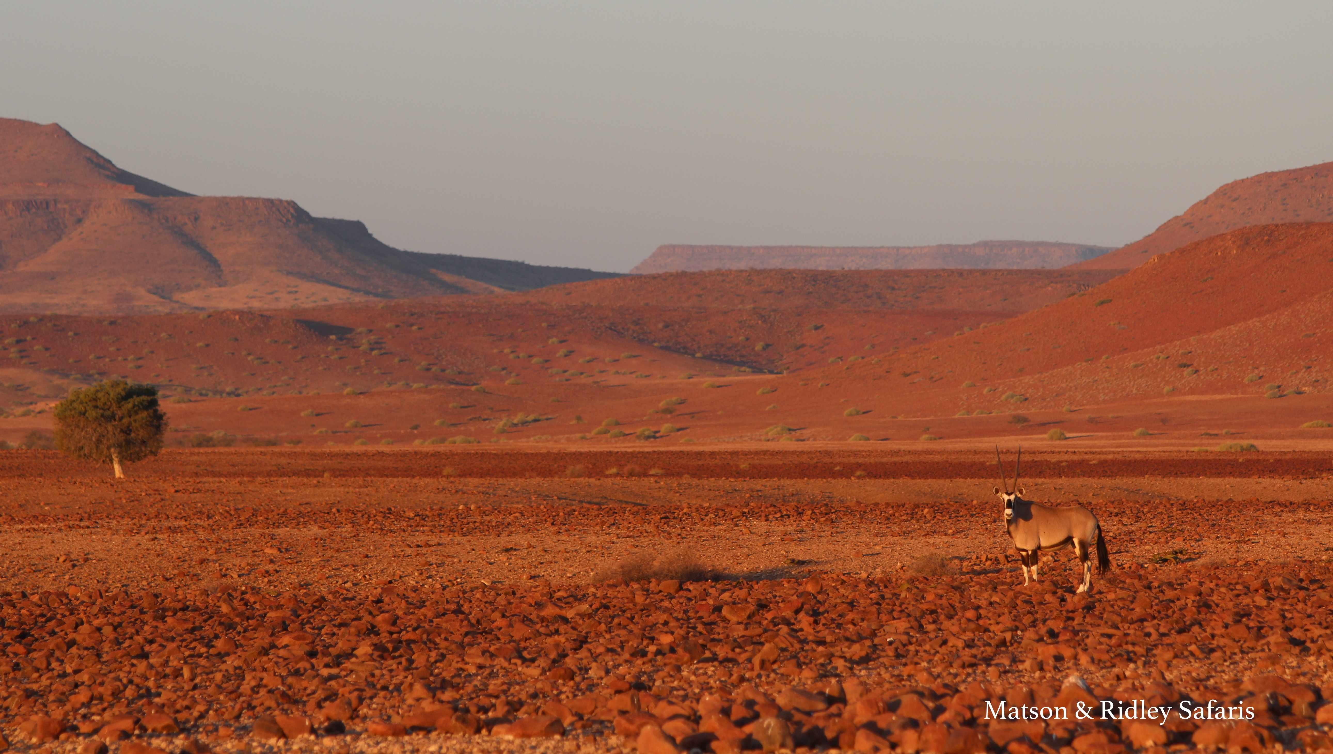 oryx Damaraland lowres