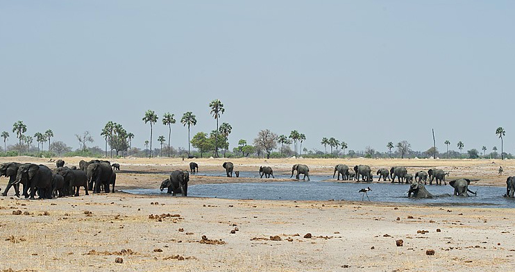 Elephants congregate in abundance in Hwange National Park, Zimbabwe - one of my favourite parks in Africa (photo: Wilderness Safaris)