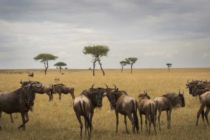 The famous Serengeti in Tanzania (credit: Asilia Africa)