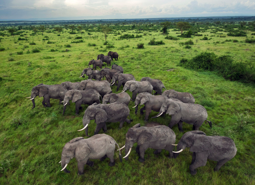 Elephants in Uganda (photo by National Geographic)